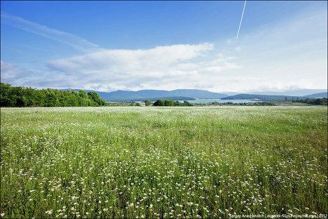 Ромашковое поле в Крыму