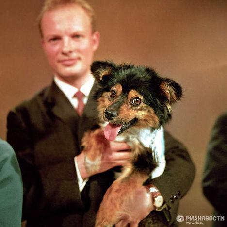Собака-космонавт Уголек на телевидении