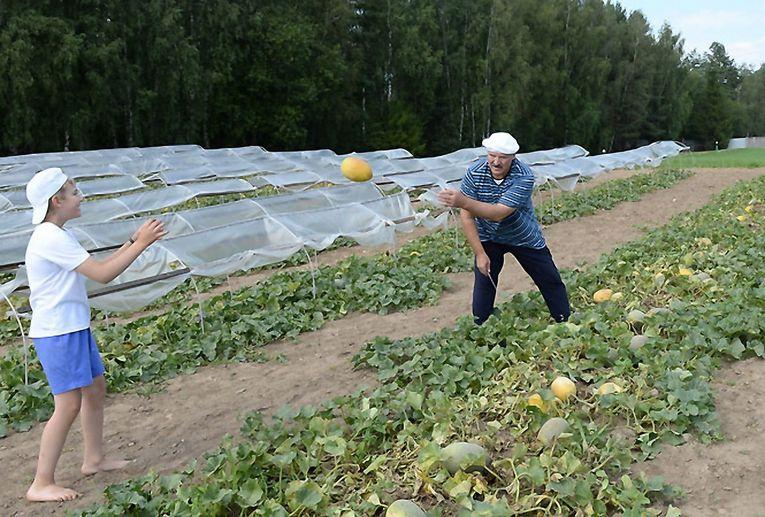 Александр Лукашенко с сыном собирают урожай