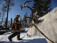 Быт оленеводов-кочевников в Сибири