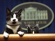 Кот Клинтонов Сокс в пресс-центре Белого дома