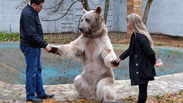 Медведь Степан в питомнике «Лосиного острова»
