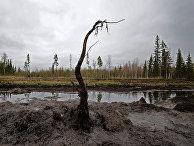 Разливы нефти на Мамонтовском месторождении в Ханты-Мансийском округе