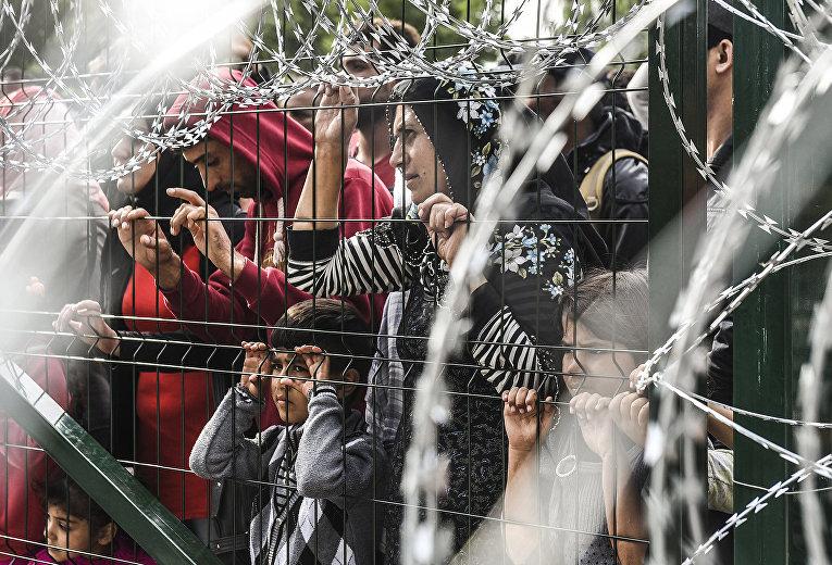 Мигранты за ограждением на границе Венгрии и Сербии