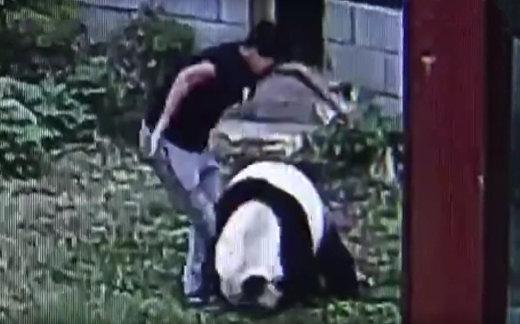 Человек vs панда