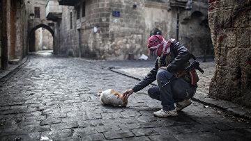 Солдат свободной сирийской армии кормит кошку в Алеппо