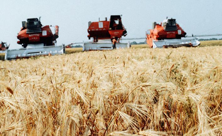 Жатва пшеницы