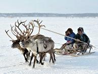День оленевода в городе Надым полуострова Ямал