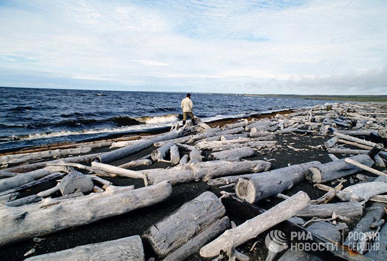 Потерянный лес на побережье Северного Ледовитого океана