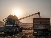 Уборка урожая риса в Краснодарском крае