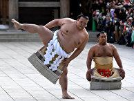 Бойцы сумо в Токио