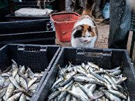 Кот у корзин с рыбой
