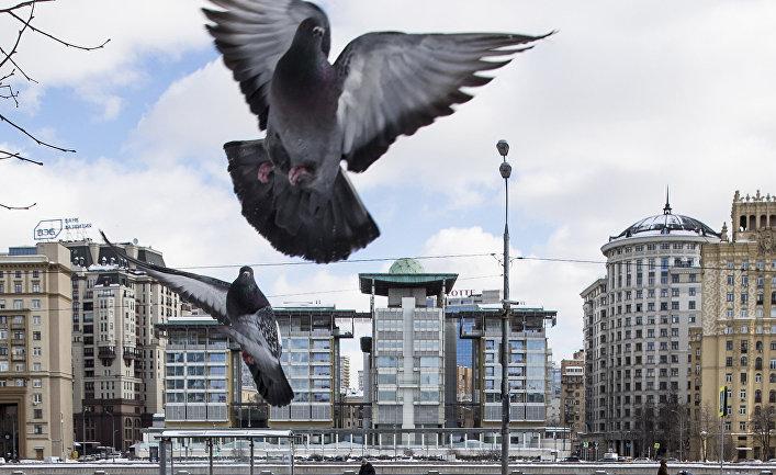 Птицы на фоне здания посольства Великобритании в Москве