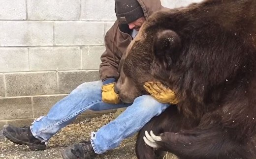 Осиротевший медведь