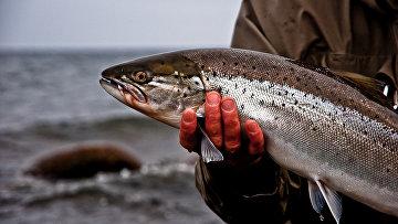 Рыбак держит пойманную форель, Борнхольм, Дания