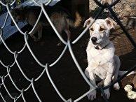 Частный приют для бездомных собак в Калининградской области