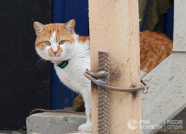 Кот Мостик, который живет на строящемся транспортном мосту через Керченский пролив