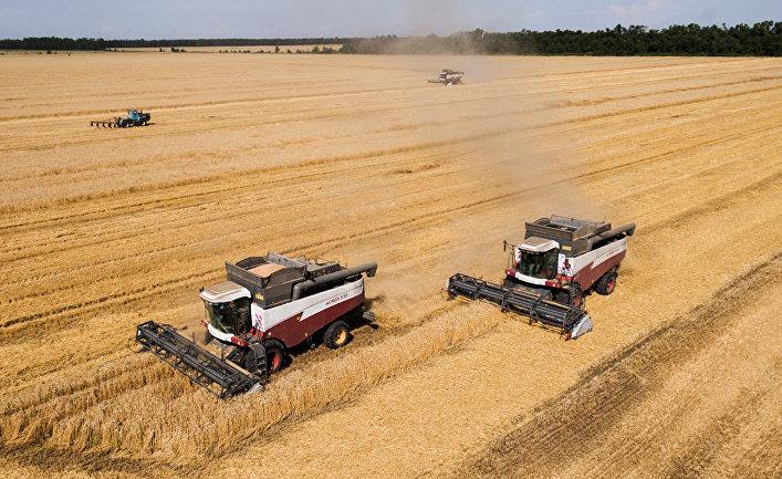 Уборка пшеницы в Краснодарском крае