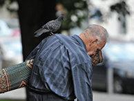 Город, человек, голуби