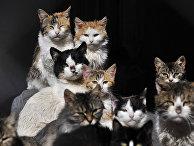 Кошачья семья в деревне Асвестохори в Греции