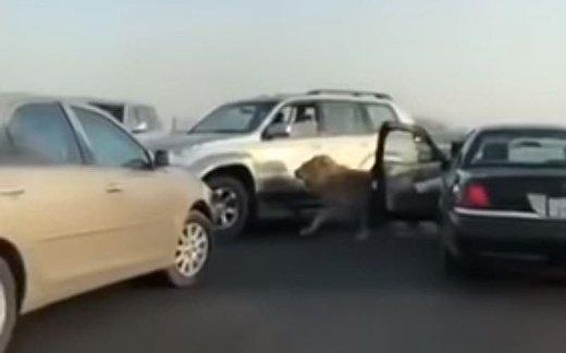 Лев на улице Кувейта