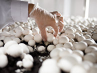 Открытие завода по выращиванию грибов в Краснодарском крае