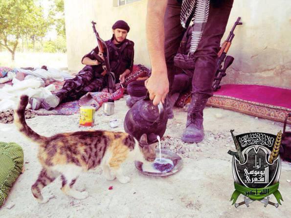 Боевики и котики