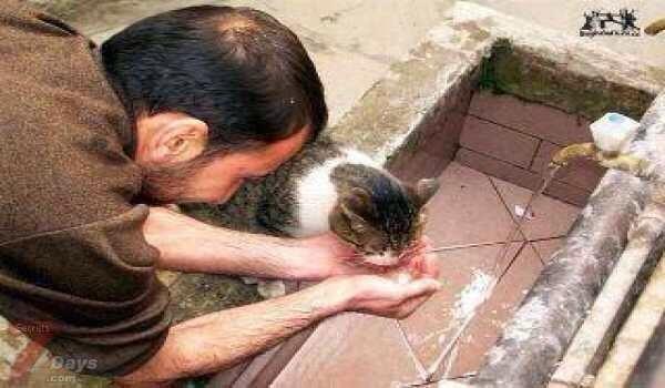Кошка пьет воду для омовений