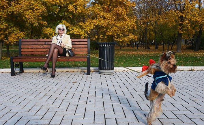 Женщина с собакой в сквере Новодевичьего монастыря в Москве