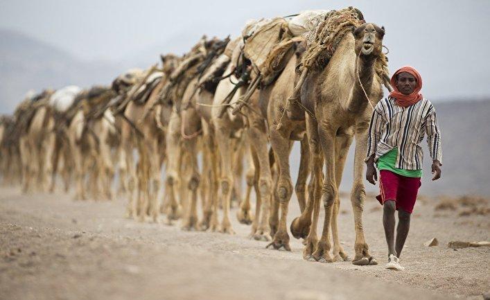 Караван идет через пустыню Данакиль в Эфиопии