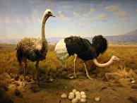 Диорама в Американском музее естественной истории