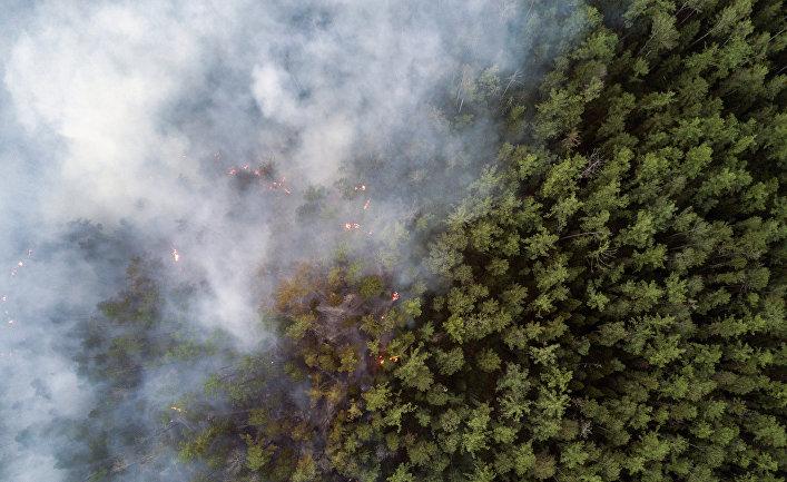 Лесной пожар в Сибири
