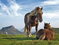 Лошади на горе Биандитц, Испания