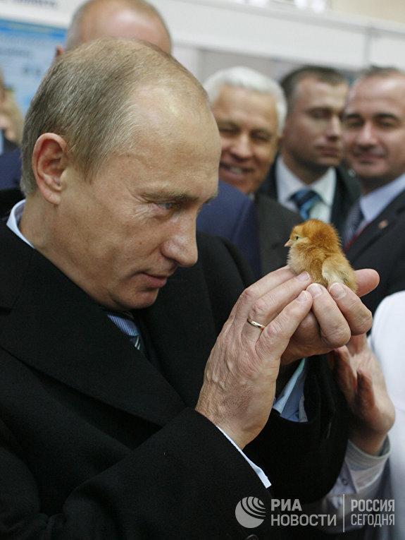 """В.Путин посетил агровыставку """"Золотая осень"""" на ВВЦ"""
