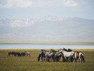 Страны мира. Киргизия