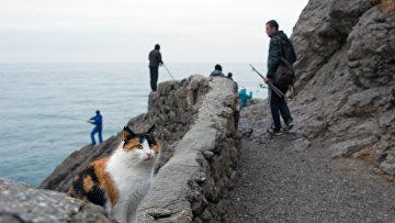 Рыбаки на Голицынской тропе в поселке Новый Свет в Крыму