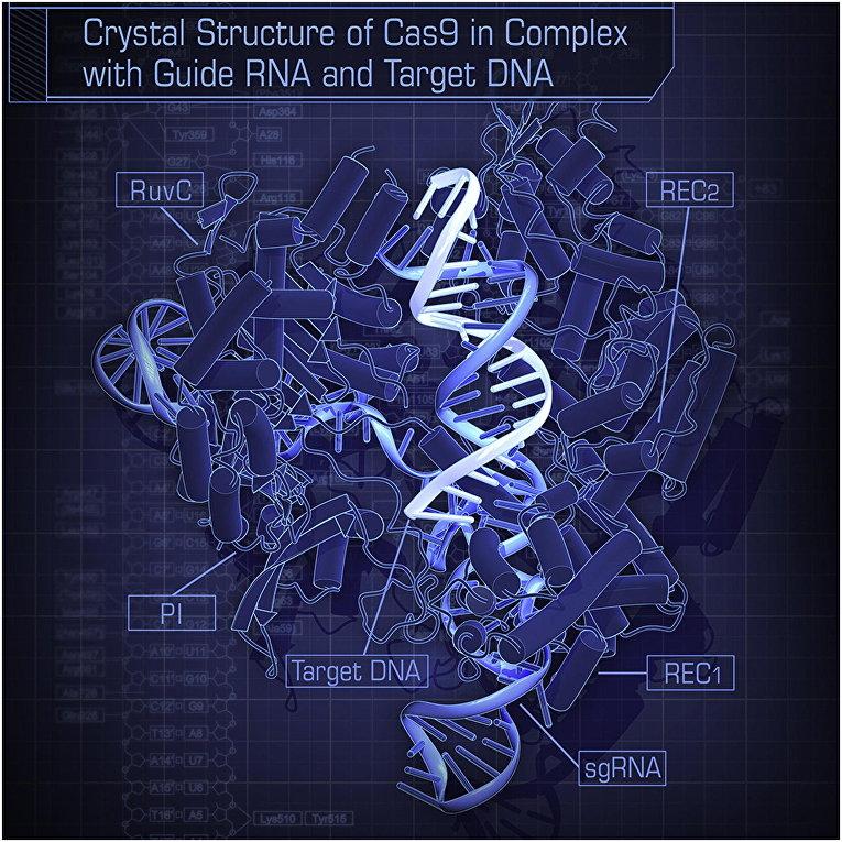 Кристаллическая структура CRISPR–Cas9