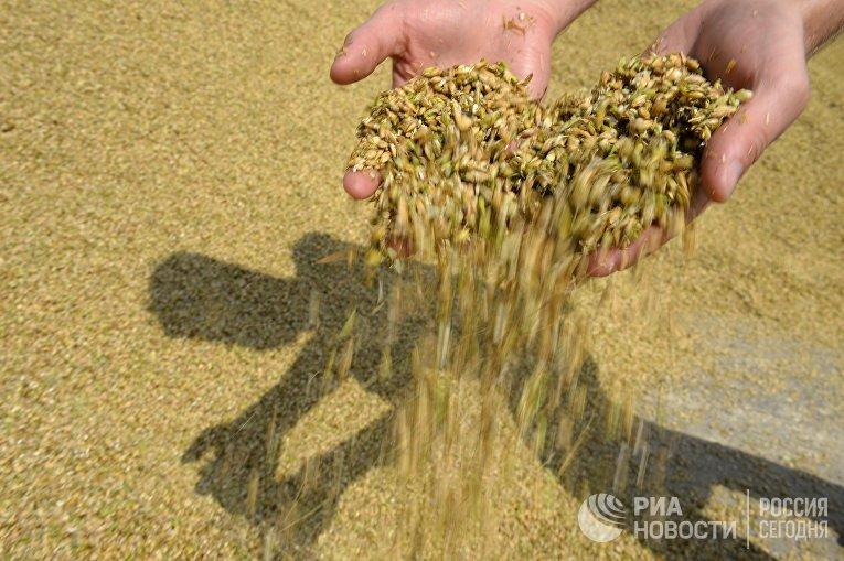 Сбор урожая в Свердловской области
