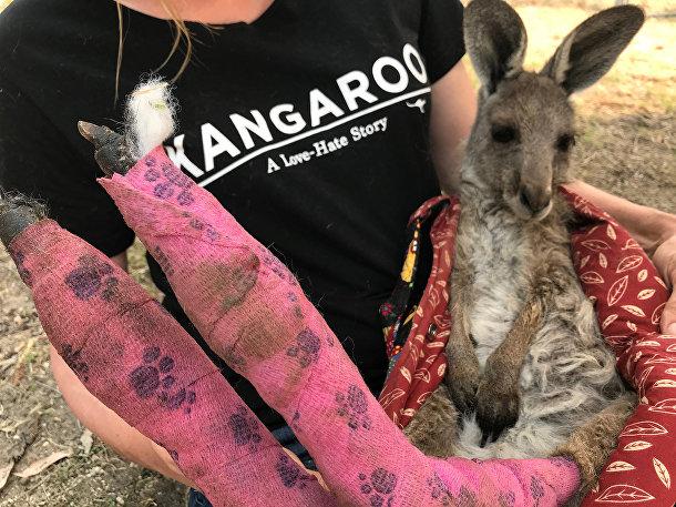 Волонтер держит кенгуру с обожженными лапами в районе Голубых гор Австралии