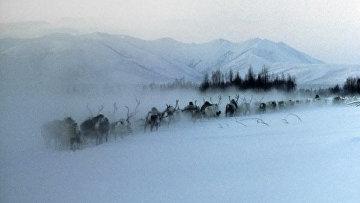Оленья упряжка в Якутии