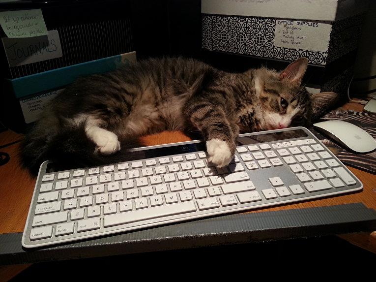 Кот на клавиатуре