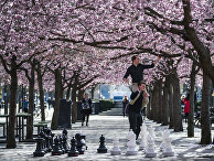 Шведы гуляют в парке во время цветения сакуры, Стокгольм, Швеция