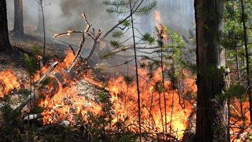 Лесные пожары в регионах России