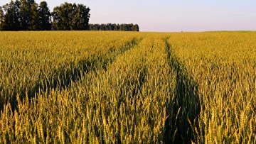 Выращивание сельскохозяйственных культур в Красноярском крае