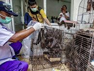 Клетка с летучими мышами на рынке в Ухане, Китай