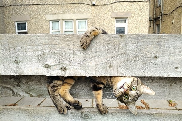 """Фотография """"Почему ты стоишь вверх ногами, мама?"""" победитель в категории """"Кошки — наши сказочные кошачьи друзья"""""""