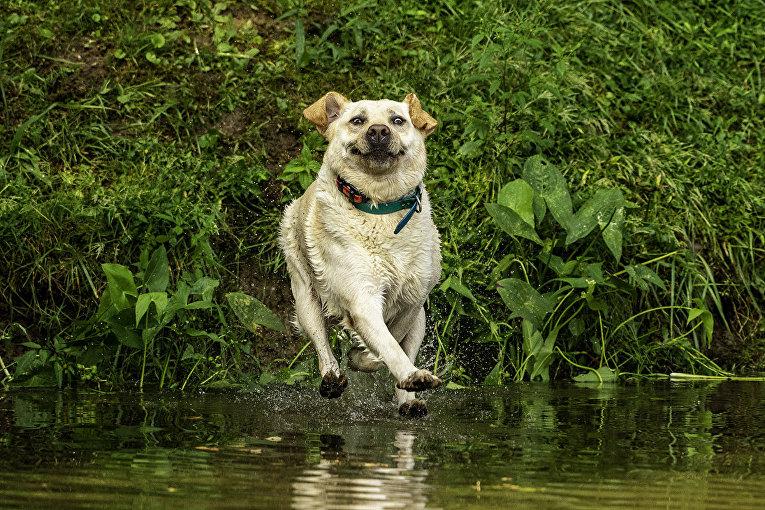 """Фотография """"Смотри, Мама, я хожу по воде"""""""