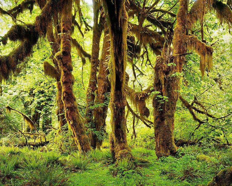 Дождевой лес, Вашингтон, США