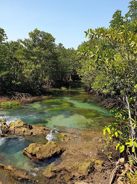 Мангровый лес вТха Пом, Таиланд