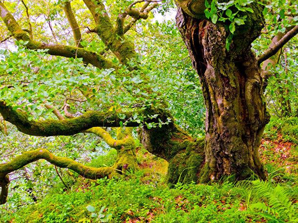 Национальный парк Келлервальд-Эдерзе, Германия
